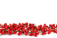 Red Christmas berries border. Red winterberry Christmas border with holly berries on branches Stock Image