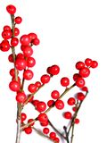 Red christmas berries on white 4 Royalty Free Stock Photography