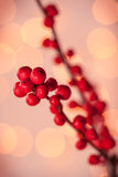 Red Christmas berries Stock Photos