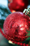 Red Christmas Bulb. Hanging on tree Royalty Free Stock Images