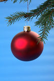 Red Christmas bulb and conifer isolated on blue Royalty Free Stock Photos