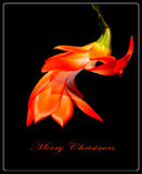 Red Christmas Cactus Greeting Card Royalty Free Stock Image