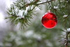 Red Christmas decoration on snow-covered pine tree outdoors. Red Christmas ornament hangs on a snow covered pine limb outdoors with snow all around Stock Images