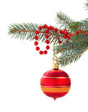 Red christmas decorations   on fir tree Royalty Free Stock Image