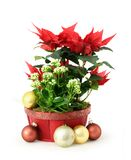Red Christmas flower Stock Image