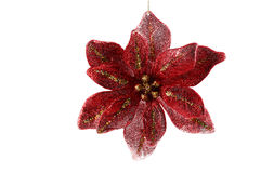 Red Christmas Flower Royalty Free Stock Photos