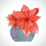 Red Christmas Flowers in Stone Vase Stock Images