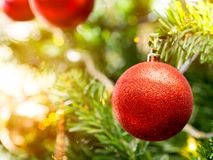 Christmas glister ball on pine tree. Red christmas glister ball decorate on pine tree with warm light  bulb Stock Images