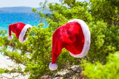 Red christmas hat on coniferous branch on white Stock Image