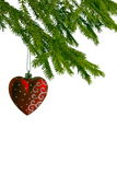 Red christmas heart on fir tree Stock Image