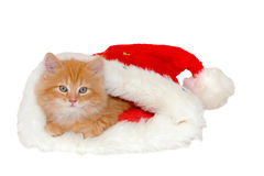 Red christmas kitten. Red kitten in christmas bonnet stock photography