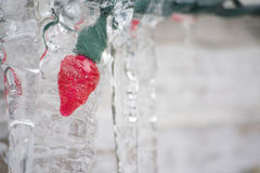 Red Christmas Light In Ice. Red christmas light trapped in ice outdoors during wintertime Stock Images
