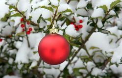 Red Christmas Ornament. Hanging in a holly bush (Ilex aquifolium) with snow on it Royalty Free Stock Photo