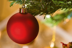 Red christmas ornament in christmas tree Stock Photos