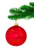 Red Christmas Ornament On Noble Pine Tree Bough. Red Christmas Ornament With Gold Stars Hanging On Noble Pine Tree Bough ~ Isolated On White Background Stock Images