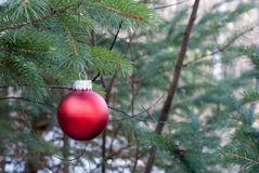 Red Christmas ornament in pine tree stock photo