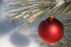 Red Christmas Ornament in Snowy Pine Tree. A single red Christmas ornament hangs in a pine tree outdoors after a fresh snowfall. Fresh snowflakes are on the pine stock photography