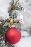 Red Christmas ornament on snowy tree Stock Image