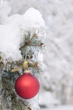 Red Christmas ornament on snowy tree Royalty Free Stock Photos