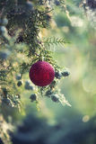 Red Christmas ornament on tree Stock Photos