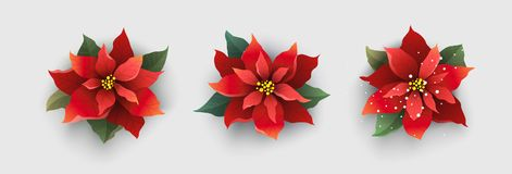 Red Christmas poinsettia flower isolated on white. Christmas background with poinsettia flowers, fir branches and lettering. Vector illustration for Christmas Royalty Free Stock Image