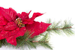 A red Christmas poinsettia Royalty Free Stock Photos