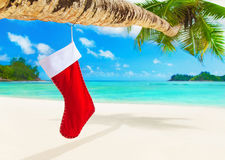 Red Christmas sock with gifts on palm tree at tropical beach. Stock Photography