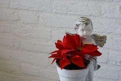 Red christmas star flower in a flowerpot with angel statue, beautiful christmas decoration isolated on a white brick wall. A red christmas star flower in a stock photography