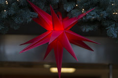 Red christmas star with green brushwood. Red christmas star decoration hanging on green brushwood royalty free stock photo