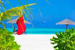Red Christmas stocking on palm tree at tropical Royalty Free Stock Photos