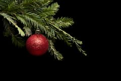 Red Christmas toy on a Christmas real pine tree. Red Christmas ball toy on a Christmas real tree branch on a black background royalty free stock photos
