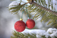 Red Christmas Toys hanging on the green pine branch, in a snowy Stock Photography