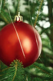 Red Christmas tree ball Royalty Free Stock Images
