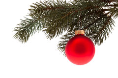 Red Christmas tree ball Royalty Free Stock Photo