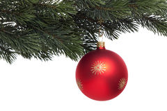 Red Christmas tree ball on fir branch. Against white background Royalty Free Stock Image