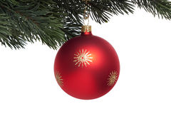 Red Christmas tree ball on fir branch Royalty Free Stock Images