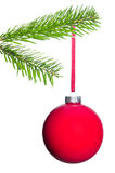 Red Christmas tree ball hangs on the fir branch. Red Christmas tree ball hangs on a fir branch before white background Stock Photo