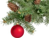 Red bauble on green christmas fir tree on white royalty free stock images
