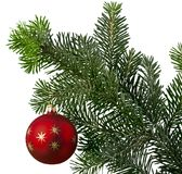 Red bauble on green christmas fir tree on white stock photos