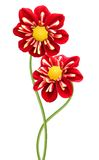Red chrysanthemum dahlia Stock Photography