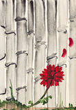 Red chrysanthemum flower and bamboo grove Stock Images
