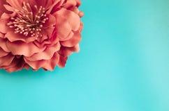 Red chrysanthemum flower on green blue background. One red chrysanthemum flower on green blue background spring gretting card copyspace Stock Photos