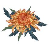 Red chrysanthemum flower and leaves composition. Vector illustration. Can by use for wedding invitations and greeting cards stock illustration