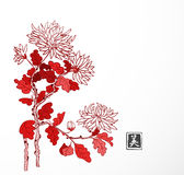 Red chrysanthemum flowers in oriental style on white background. Traditional oriental ink painting sumi-e, u-sin, go-hua. Contains hieroglyph - beauty Stock Images