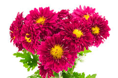 Red chrysanthemums bouquet. Isolated on a white background Stock Photo