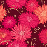 Red chrysanthemums Stock Photos