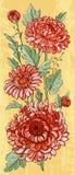 Red chrysanthemums design vector illustration