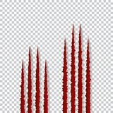 Red claws scratches - vector  on transparent background. Talons cuts animal cat, dog, tiger, lion, bear Royalty Free Stock Photo