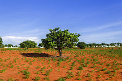 Red Clay, Blue Sky, Green Tree. Royalty Free Stock Photos