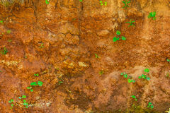 Red clay with plants Stock Photo
